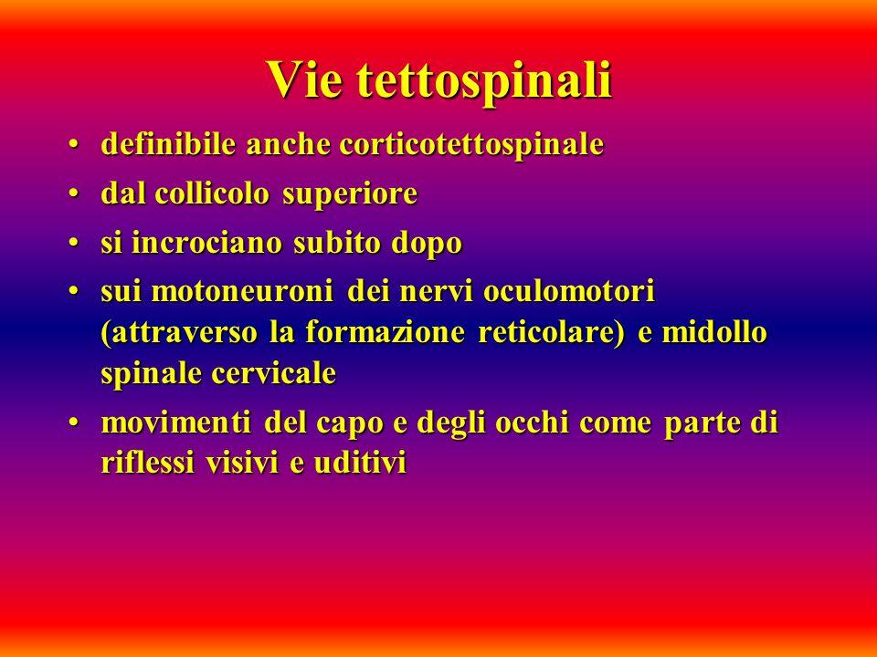 Vie tettospinali definibile anche corticotettospinale