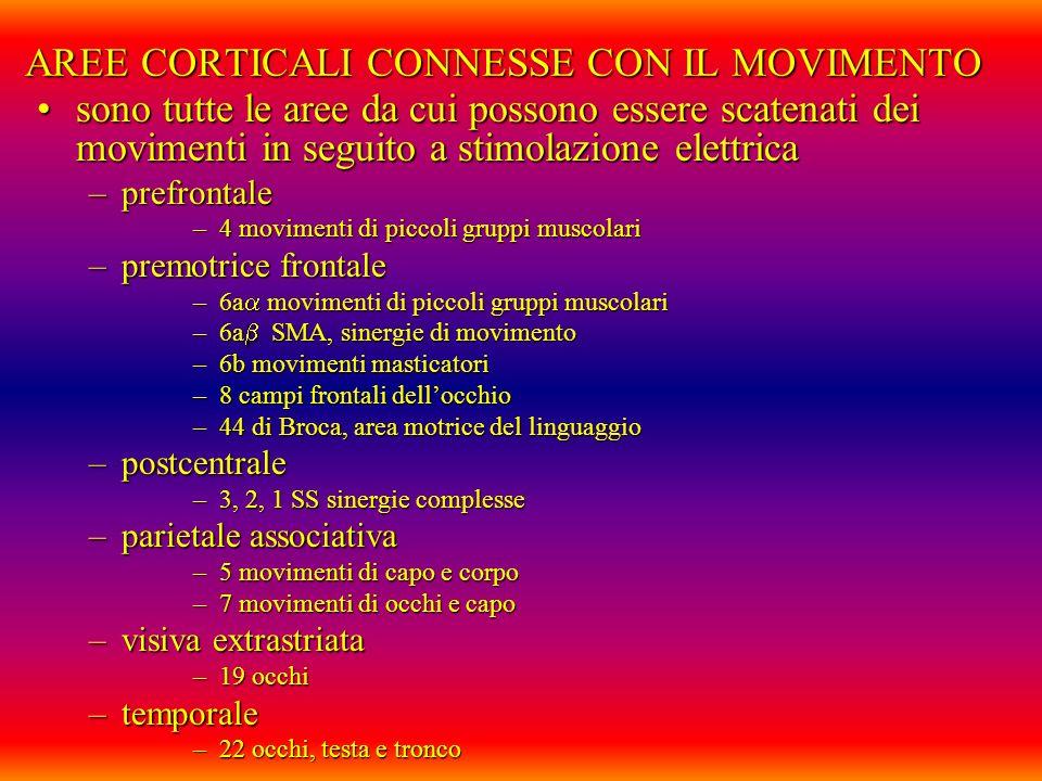 AREE CORTICALI CONNESSE CON IL MOVIMENTO