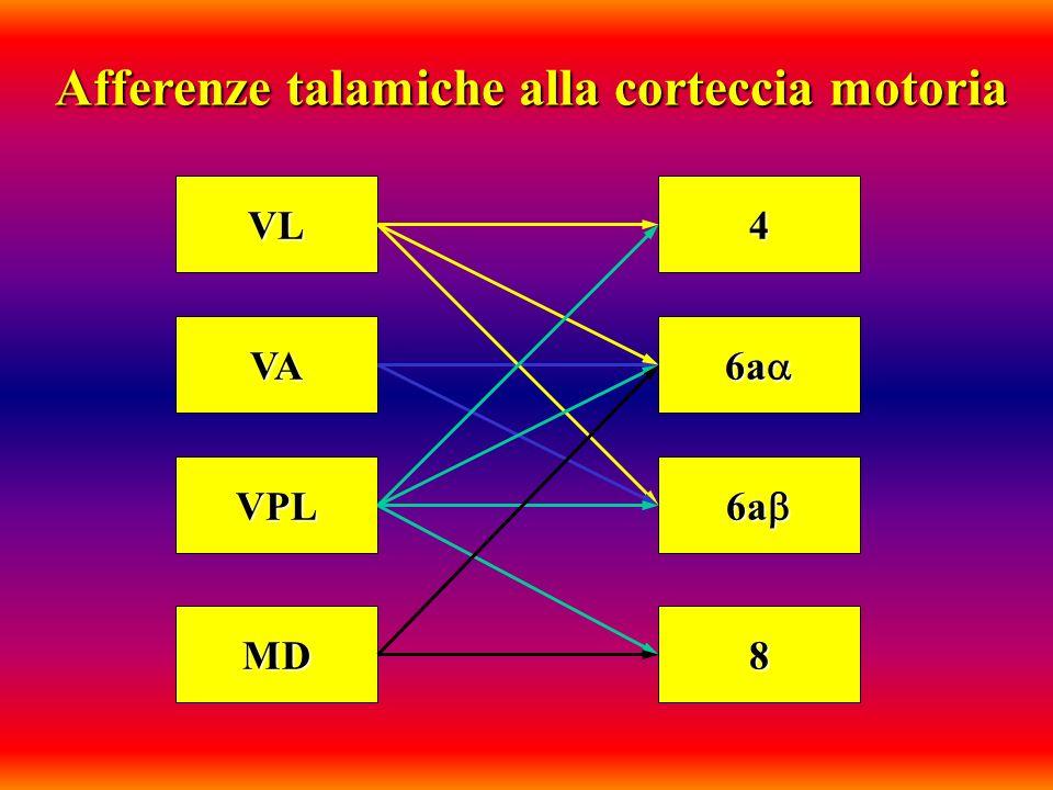 Afferenze talamiche alla corteccia motoria