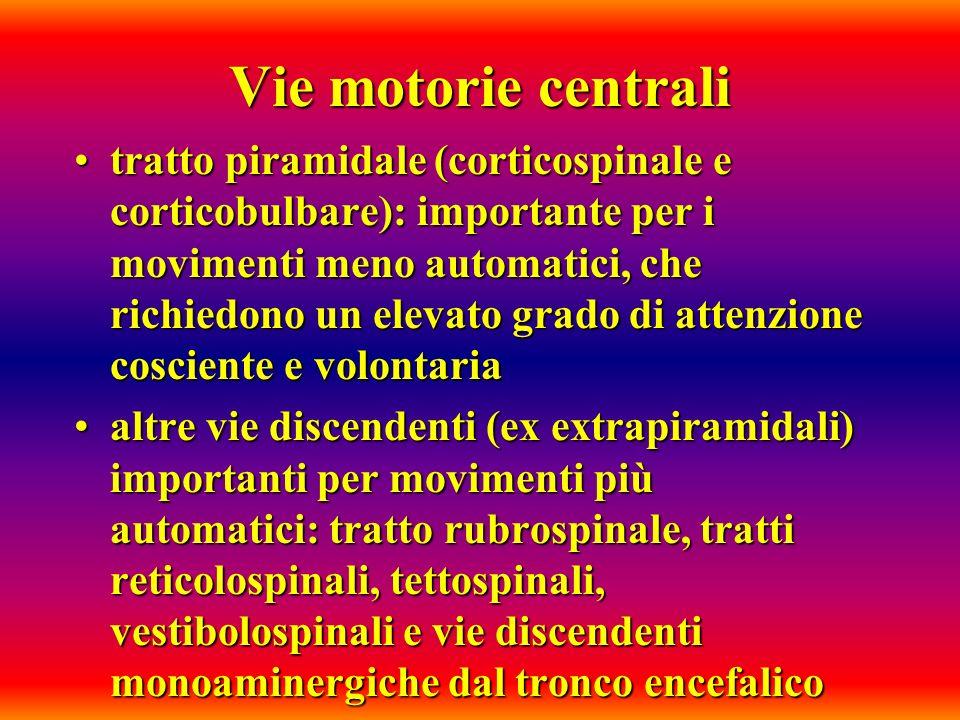 Vie motorie centrali