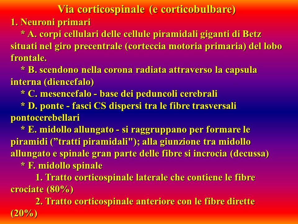 Via corticospinale (e corticobulbare)