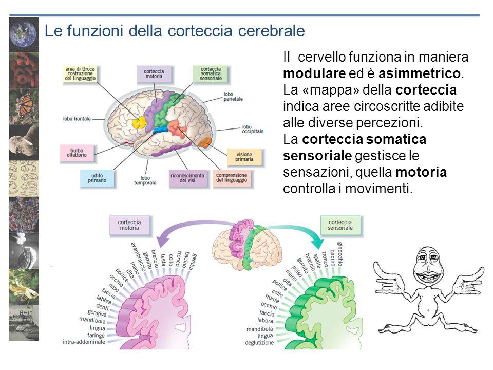 Le funzioni della corteccia cerebrale