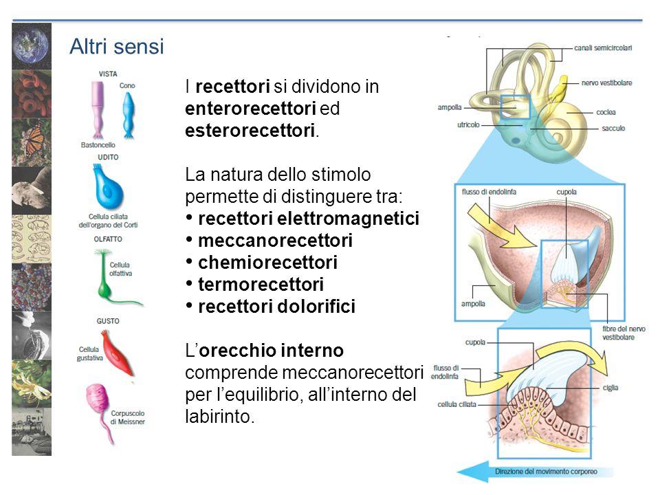 Altri sensi I recettori si dividono in enterorecettori ed esterorecettori. La natura dello stimolo permette di distinguere tra:
