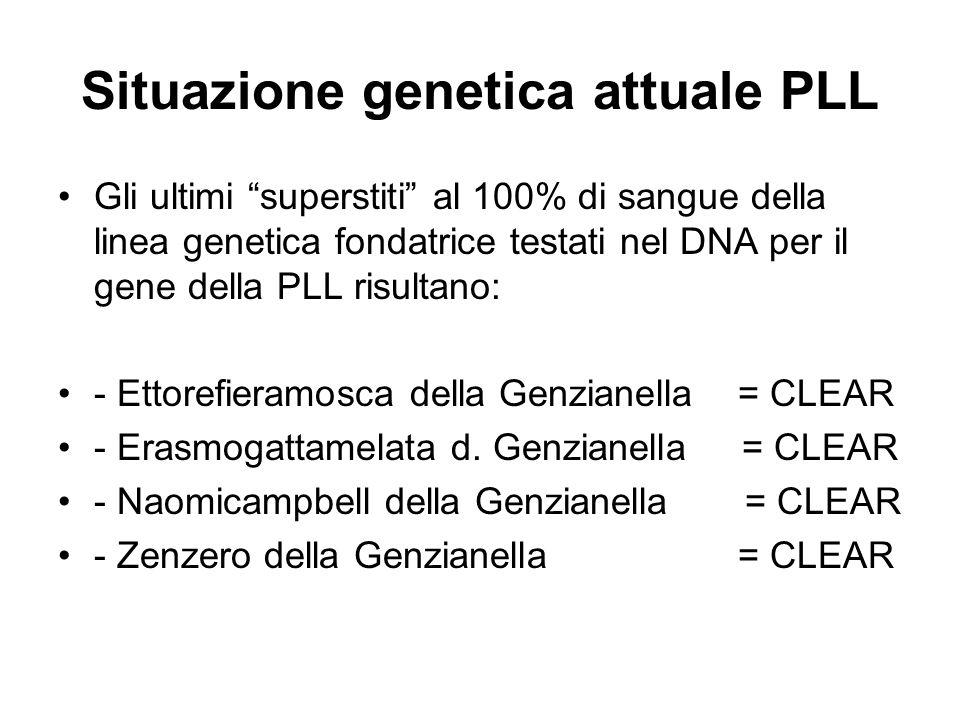 Situazione genetica attuale PLL