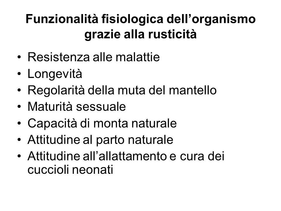 Funzionalità fisiologica dell'organismo grazie alla rusticità
