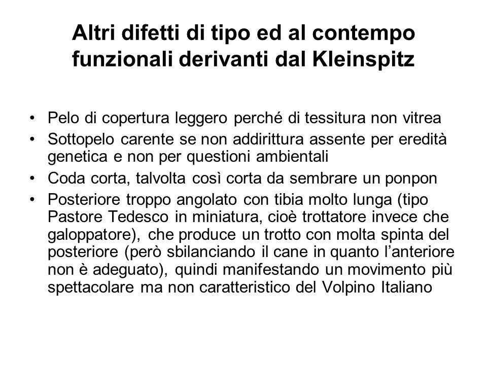 Altri difetti di tipo ed al contempo funzionali derivanti dal Kleinspitz