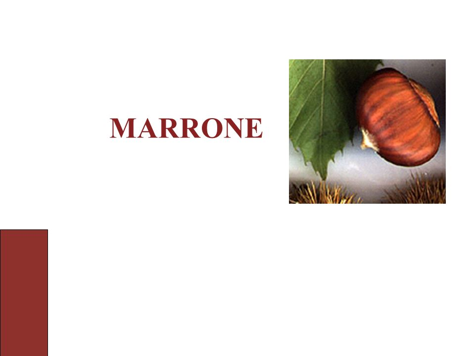 MARRONE Ho visto: i fruiti marroni