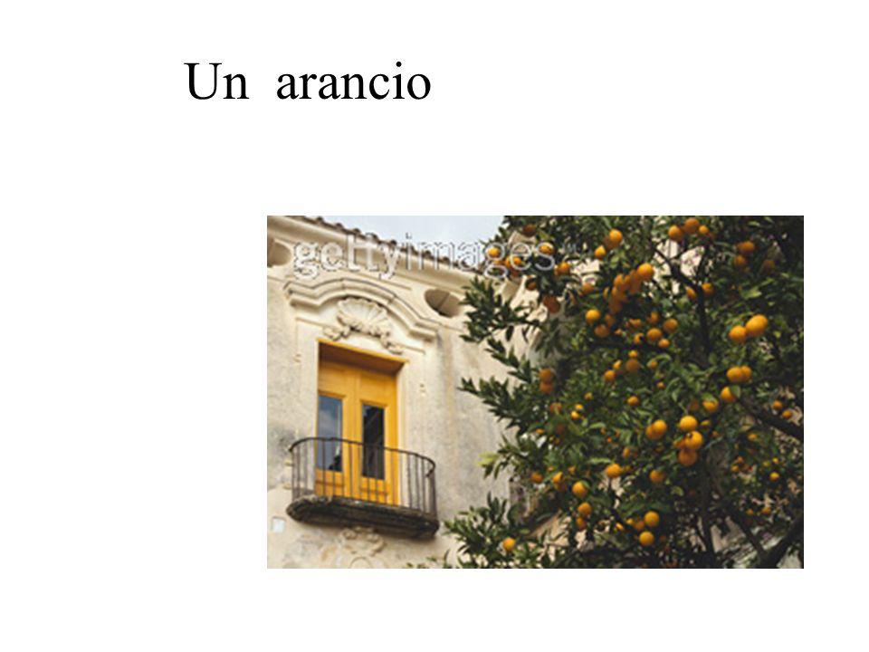 Un arancio