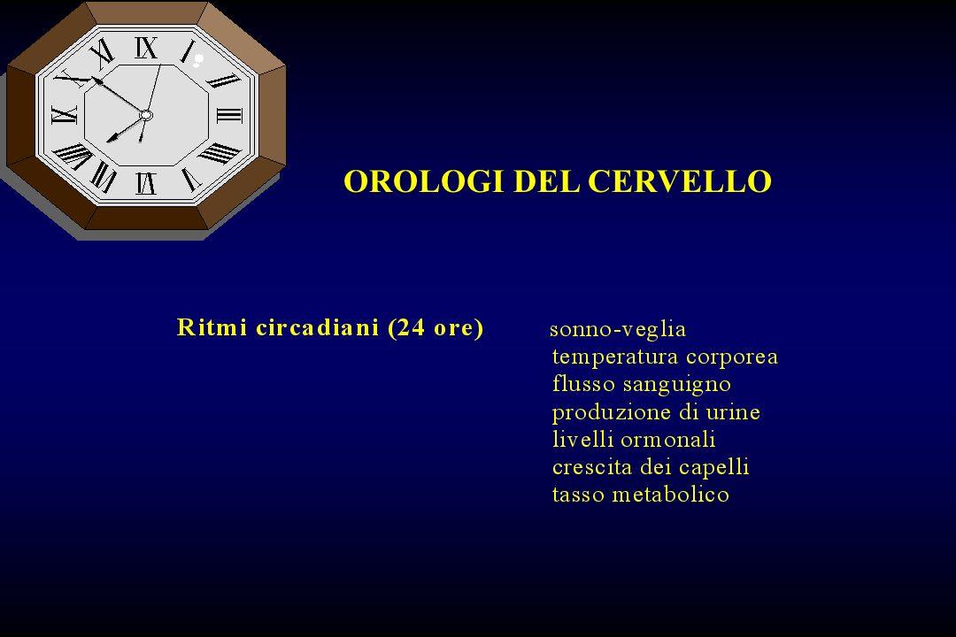 OROLOGI DEL CERVELLO