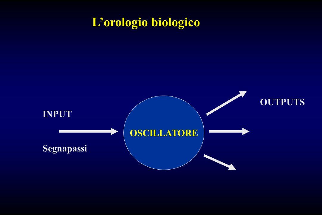 L'orologio biologico OUTPUTS INPUT OSCILLATORE Segnapassi