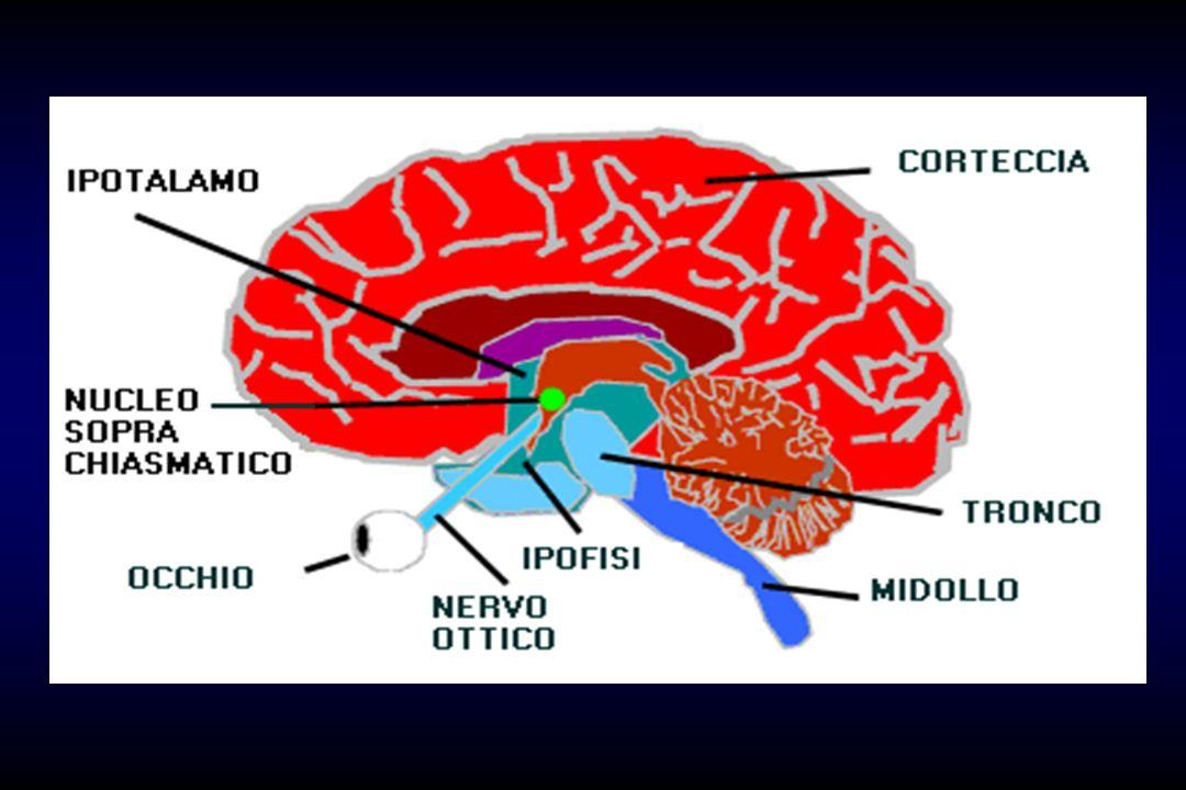 Il sistema circadiano di un organismo è composto da sistemi che ricevono uno stimolo ambientale, sistemi che generano un ritmo di 24 ore, e sistemi che inviano le informazioni sull andamento ritmico a tutti i tessuti dell organismo, secondo lo schema: