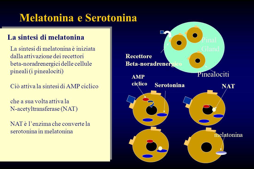 Melatonina e Serotonina