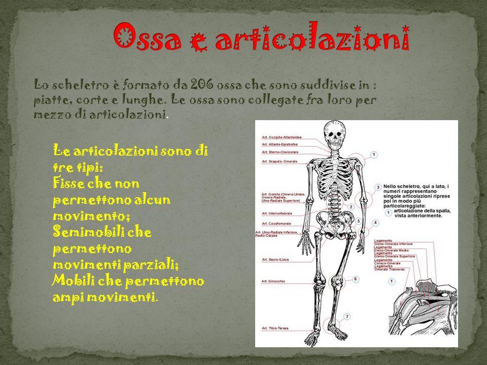 Ossa e articolazioni Le articolazioni sono di tre tipi: