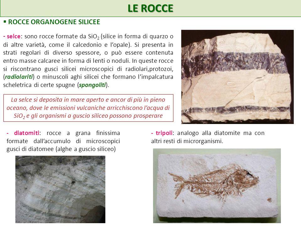 LE ROCCE ROCCE ORGANOGENE SILICEE