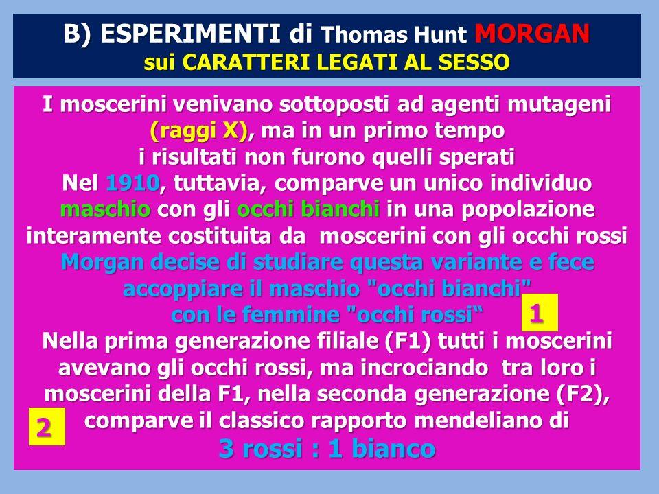 B) ESPERIMENTI di Thomas Hunt MORGAN sui CARATTERI LEGATI AL SESSO