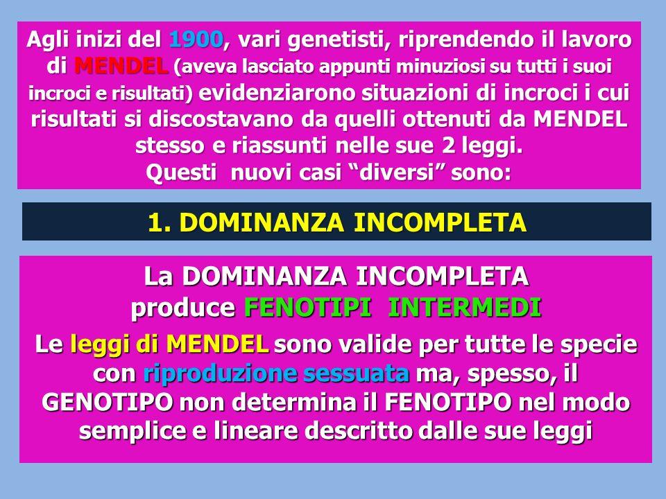 La DOMINANZA INCOMPLETA produce FENOTIPI INTERMEDI