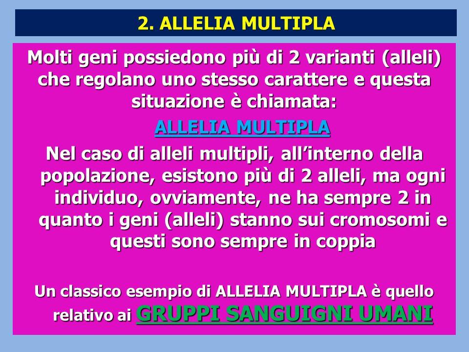 2. ALLELIA MULTIPLA Molti geni possiedono più di 2 varianti (alleli) che regolano uno stesso carattere e questa situazione è chiamata: