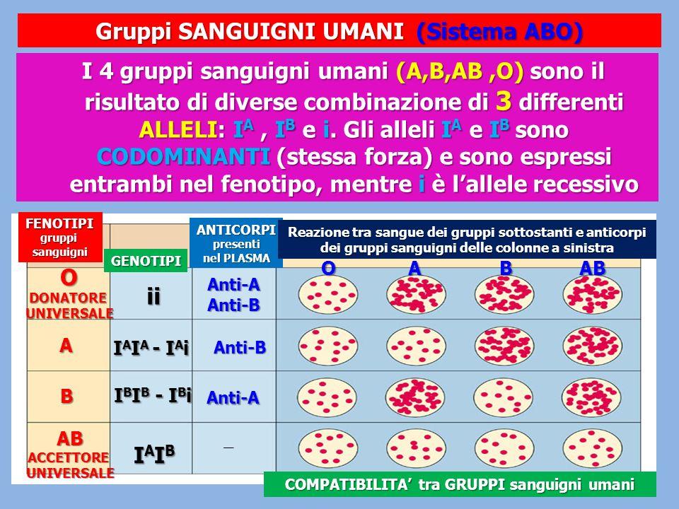 Gruppi SANGUIGNI UMANI (Sistema ABO)