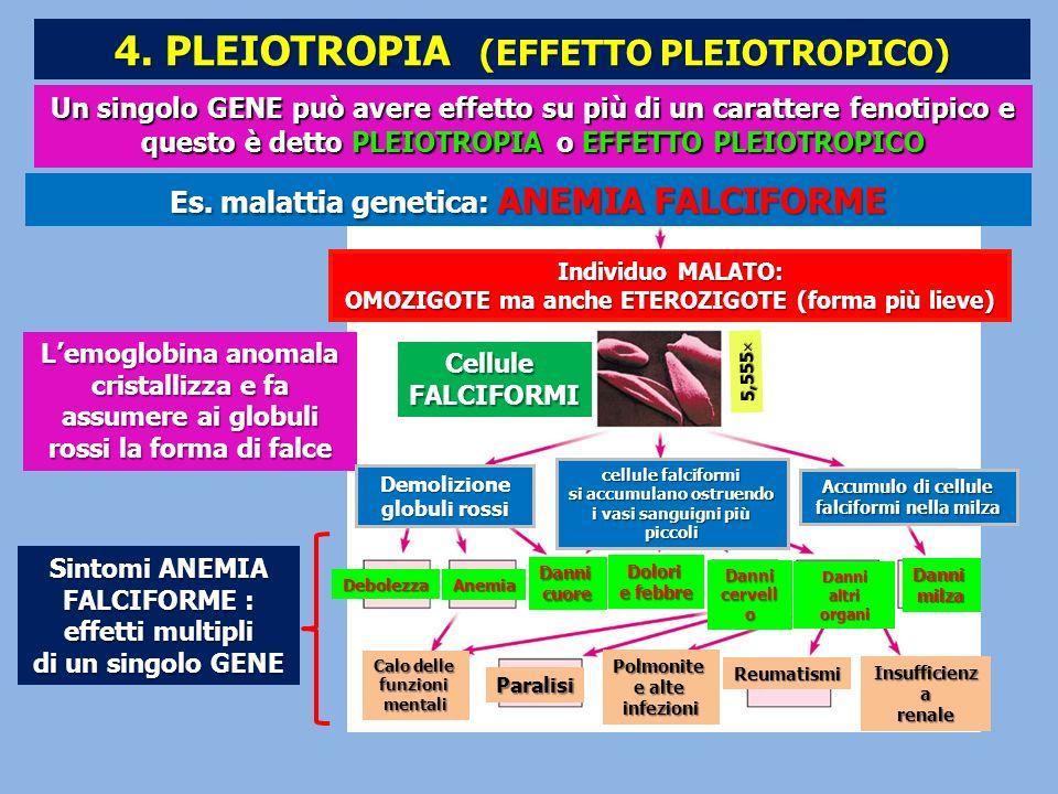 4. PLEIOTROPIA (EFFETTO PLEIOTROPICO)