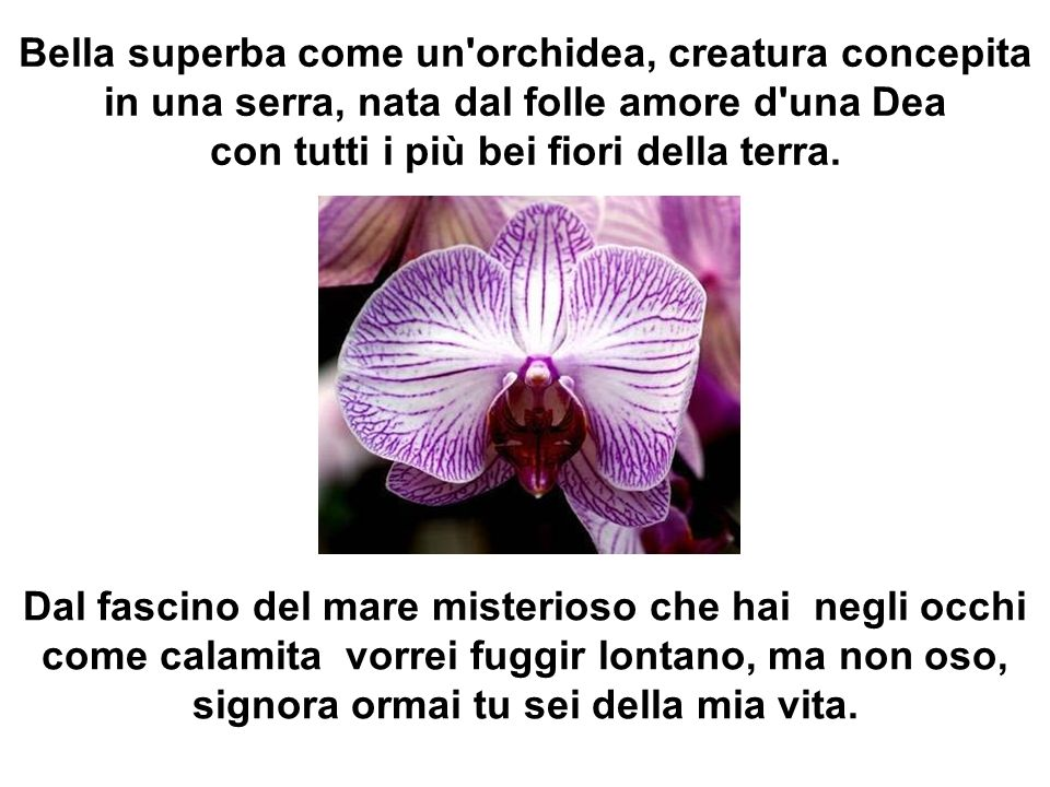 Bella superba come un orchidea, creatura concepita in una serra, nata dal folle amore d una Dea con tutti i più bei fiori della terra.
