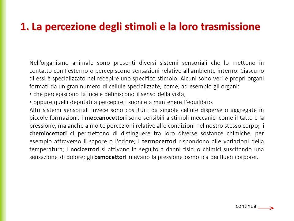 1. La percezione degli stimoli e la loro trasmissione