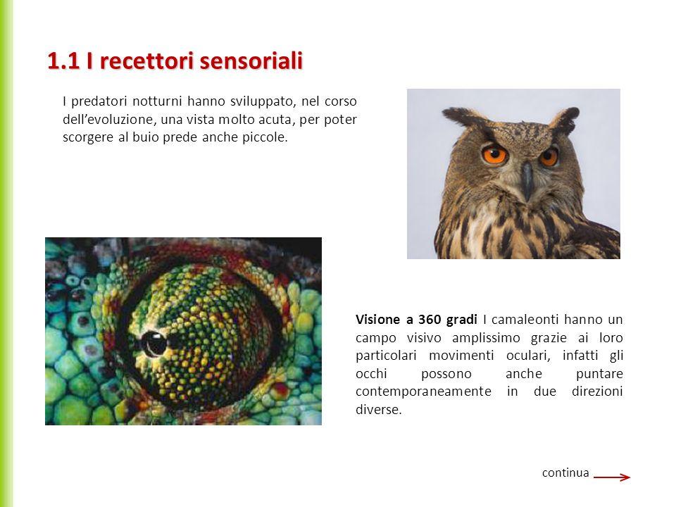 1.1 I recettori sensoriali