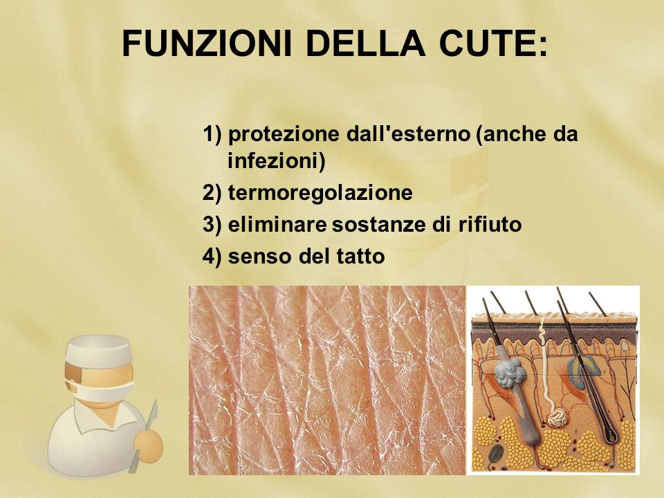FUNZIONI DELLA CUTE: 1) protezione dall esterno (anche da infezioni) 2) termoregolazione 3) eliminare sostanze di rifiuto 4) senso del tatto