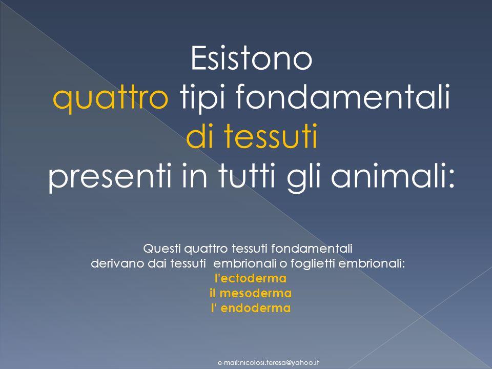 quattro tipi fondamentali di tessuti presenti in tutti gli animali: