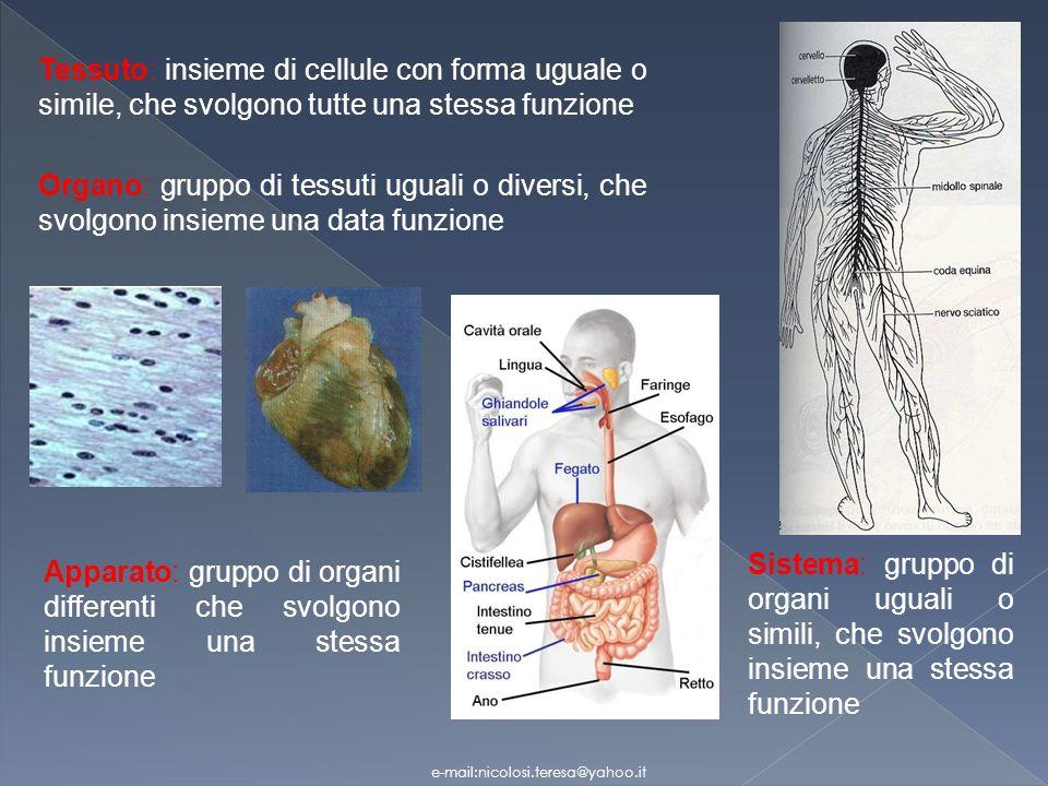 Tessuto: insieme di cellule con forma uguale o simile, che svolgono tutte una stessa funzione