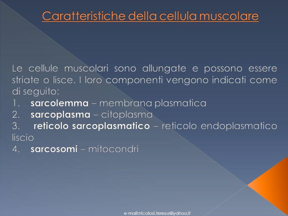 Caratteristiche della cellula muscolare