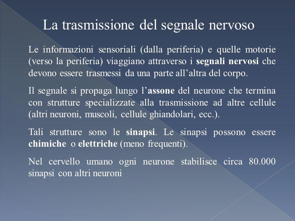 La trasmissione del segnale nervoso