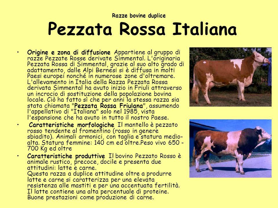 Razze bovine duplice Pezzata Rossa Italiana