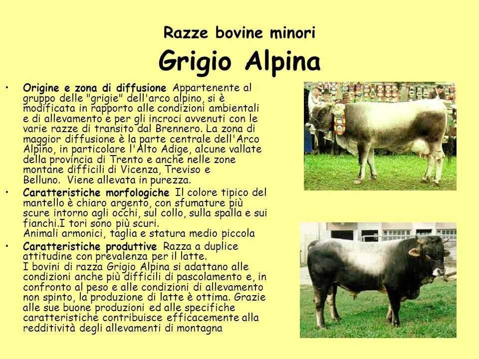 Razze bovine minori Grigio Alpina
