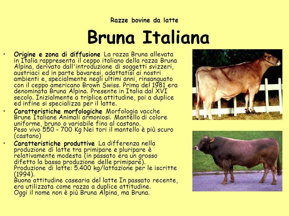 Razze bovine da latte Bruna Italiana
