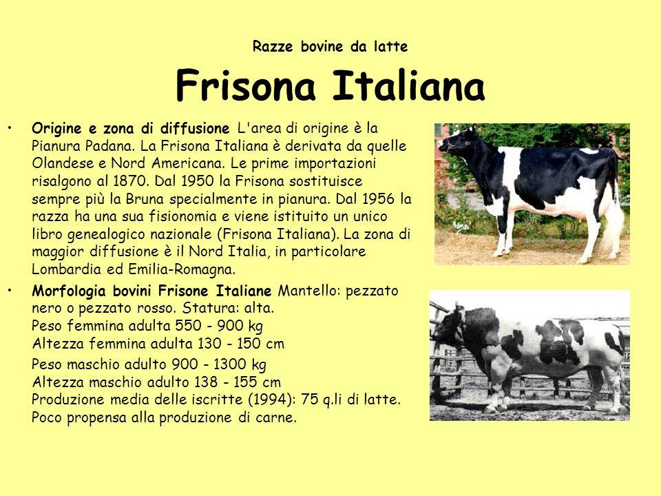 Razze bovine da latte Frisona Italiana