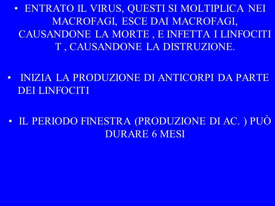 IL PERIODO FINESTRA (PRODUZIONE DI AC. ) PUÒ DURARE 6 MESI