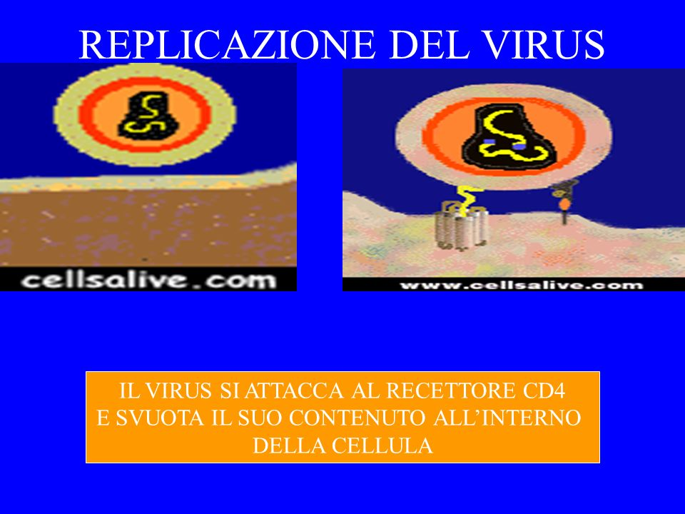REPLICAZIONE DEL VIRUS