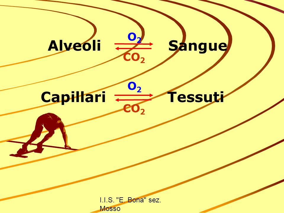 Alveoli Sangue Capillari Tessuti