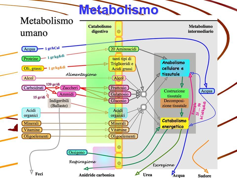 Metabolismo I.I.S. E. Bona sez. Mosso Prof. Luciano Mazzon