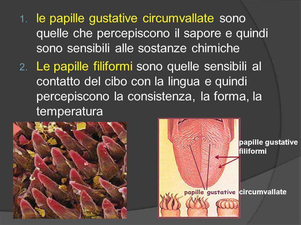 le papille gustative circumvallate sono quelle che percepiscono il sapore e quindi sono sensibili alle sostanze chimiche