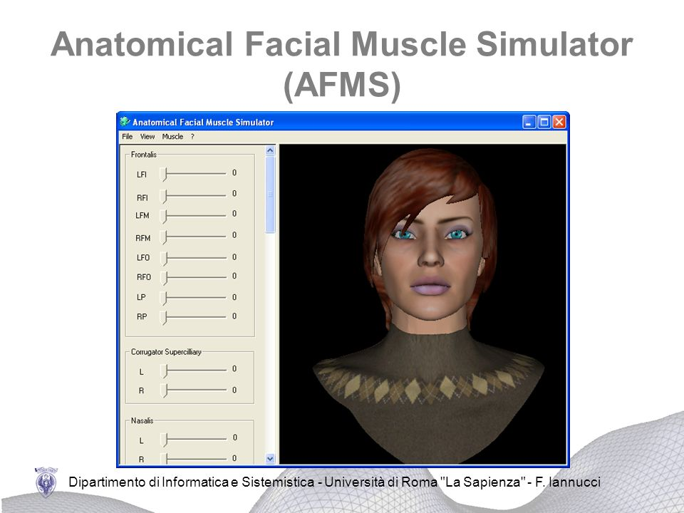 Anatomical Facial Muscle Simulator (AFMS)