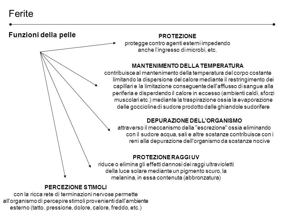 MANTENIMENTO DELLA TEMPERATURA DEPURAZIONE DELL'ORGANISMO