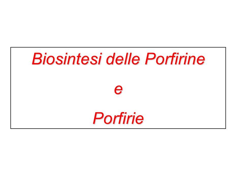 Biosintesi delle Porfirine