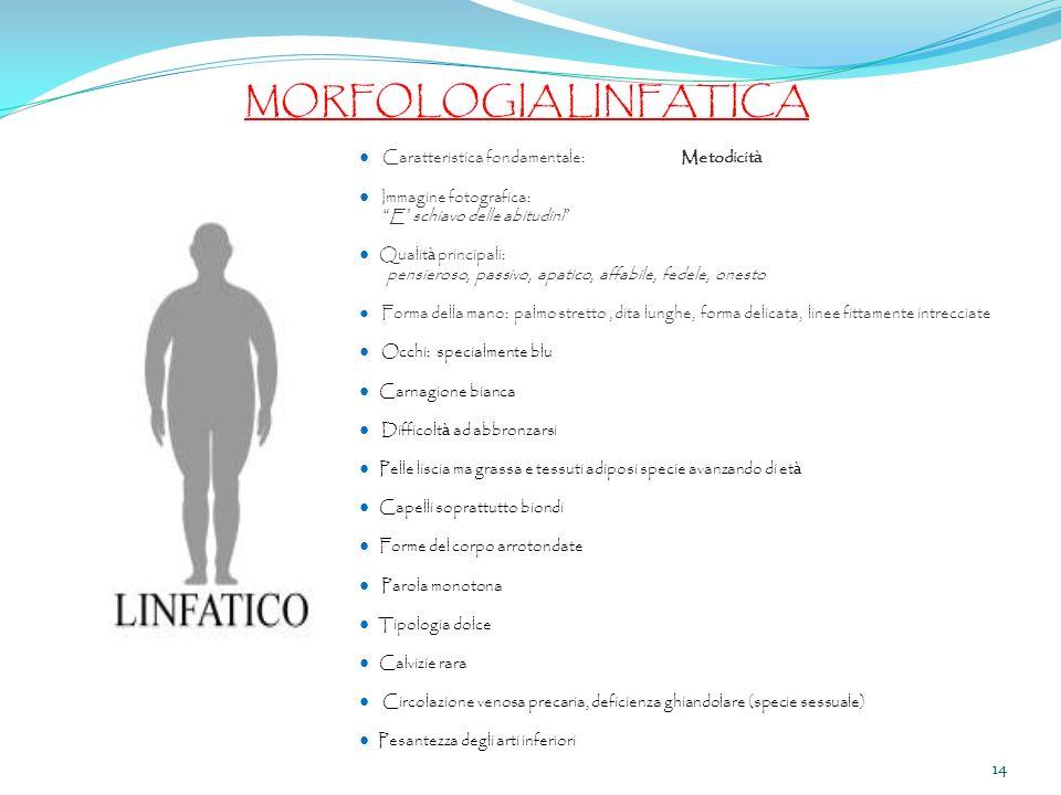 MORFOLOGIA LINFATICA ● Caratteristica fondamentale: Metodicità
