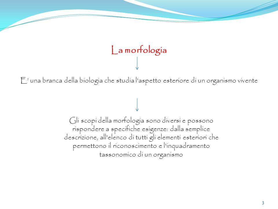 La morfologia E' una branca della biologia che studia l aspetto esteriore di un organismo vivente.