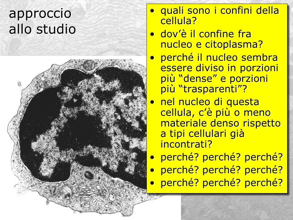 approccio allo studio quali sono i confini della cellula