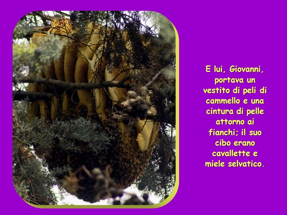E lui, Giovanni, portava un vestito di peli di cammello e una cintura di pelle attorno ai fianchi; il suo cibo erano cavallette e miele selvatico.