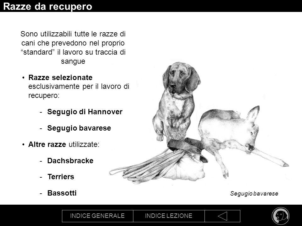 Razze da recupero Sono utilizzabili tutte le razze di cani che prevedono nel proprio standard il lavoro su traccia di sangue.