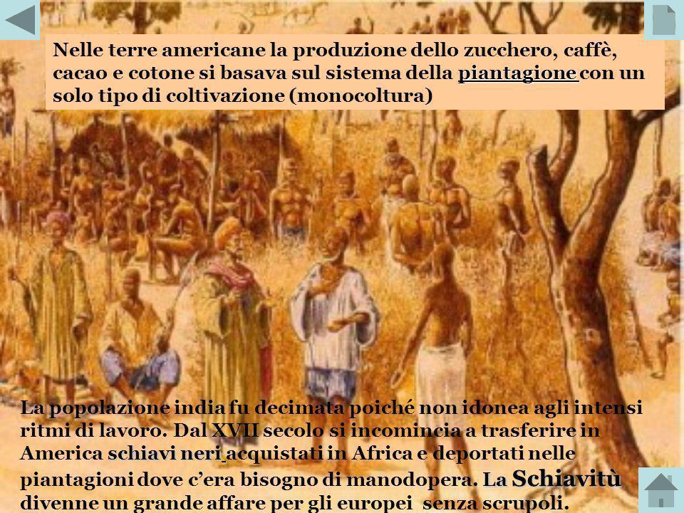 Nelle terre americane la produzione dello zucchero, caffè, cacao e cotone si basava sul sistema della piantagione con un solo tipo di coltivazione (monocoltura)