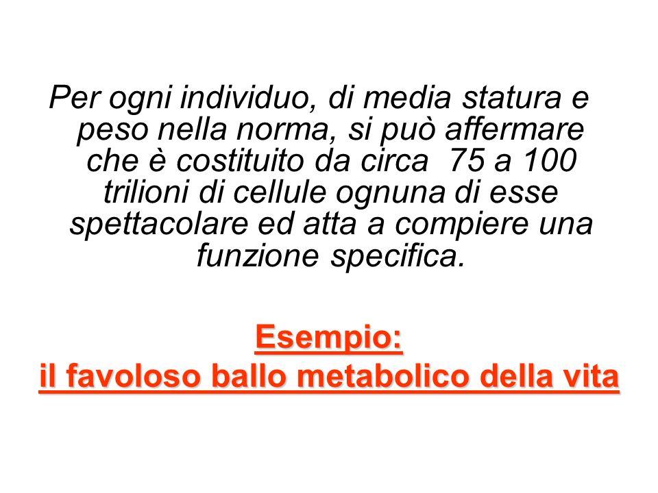 Esempio: il favoloso ballo metabolico della vita